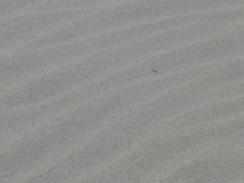 sand fine grain grey fine-1146131